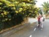 38 Gula vinterblommor längs vägen